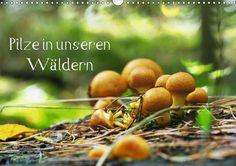 Pilze in unseren Wäldern Posterbuch