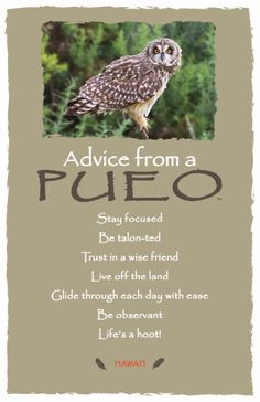 Advice from Pueo Frameable Postcard. Your True Nature