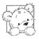 Bear in a Window
