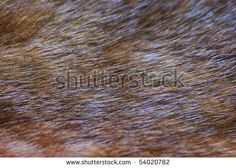 Fragment of brown mink fur, close-up