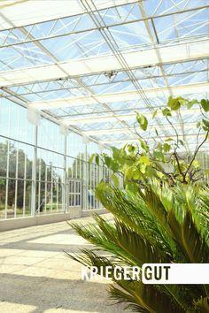 In dieser wunderschönen Atmosphäre könnt ihr euch bei uns nicht nur beraten lassen in Sachen Pflanzen und Garten, sondern auch Shoppen, Essen, Trinken und Feiern. Zum Beispiel bei der nächsten Gartenlounge am 29.Juni.  Nähere Infos unter: www.facebook.com/events/122300611974094/  #cafe #cocktail #essen #glashaus #gartenlounge #gartencafe #kriegergut #perg Juni, Events, Facebook, Park, Cocktail Food, Landscape Nursery, Glass House, Plants