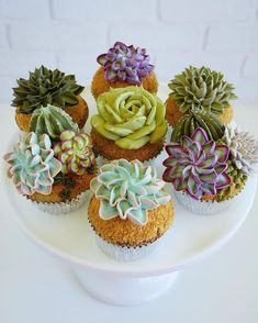 Two years ago Leslie Vigil decided to merge her love of succulents and baking, using buttercream to decorate cupcakes and multi-teared cakes with bountiful collections of aloe, cacti, Cactus Cupcakes, Succulent Cupcakes, Beautiful Cakes, Amazing Cakes, 3d Jelly Cake, Arts Bakery, Plain Cake, Biscuits, Vegan Cake