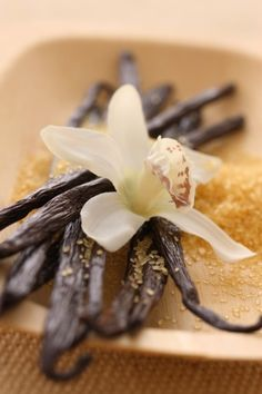 specifically Mexican vanilla beans. I will be making some homemade Mexican vanilla once settled in Alabama. No other vanilla comes close to being so good! Voyage Reunion, Vanilla Plant, Food Science, Food Facts, Perfume, Spice Mixes, Yummy Eats, Food Illustrations, Frozen Yogurt