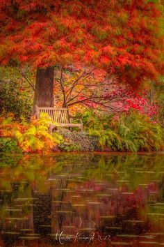 Natural fall colors are just so incredibly beautiful! by Martin Kavanagh Beautiful World, Beautiful Places, Beautiful Pictures, Simply Beautiful, Autumn Scenes, Seasons Of The Year, All Nature, Fall Pictures, Belle Photo