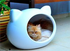 cat cave.....from his facial expression, I guess it's not his color..=)