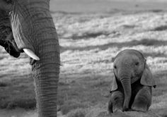 I am determined to have a cute little elephant like that!
