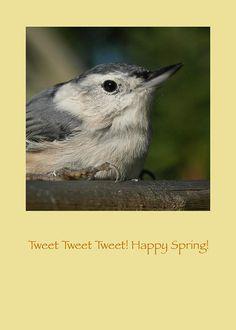 Happy Spring Bird