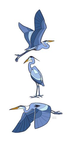 Studies - Heron by oxboxer on DeviantArt