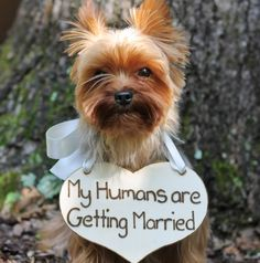 Puppy Sign - My Humans are Getting Married Rustic Wedding, Shabby Chic Wedding by MichelesCottage on Etsy https://www.etsy.com/listing/163334524/puppy-sign-my-humans-are-getting-married