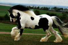 Beautiful animal photos that I've collected over the years, they now have found a home on pinterest, yay! ♥ #horses #equestrian #lovehorses #animals #pets #wildlife #beautiful #cute #adorable #love #nature #aww