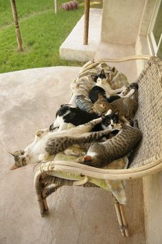 Fur body convention.                    (KO) Cats!  A whole bunch of cats! Buddies. Everybody warm and cozy. Everybody happy.