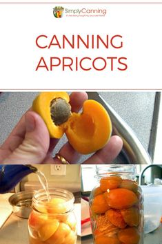 Canning apricots is safe to water bath can due to the high acidity. In this tutorial, shows you how easy it is to can apricots. Recipes included for light and heavy syrup too! Canning Tips, Canning Recipes, Canning Apricots, Easy Dinner Recipes, Easy Meals, Canned Applesauce, Apricot Recipes, Apricot Ideas, Pickle Vodka
