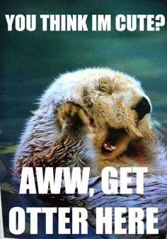 you otter check this out. otter humor is the best Animal Captions, Funny Animals With Captions, Animal Puns, Animal Quotes, Funny Animal Pictures, Funniest Pictures, Animal Humor, Funny Photos, Funny Cute
