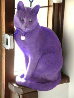 Purple Kitty!!! Now if I was going to own a cat.. this would be it..
