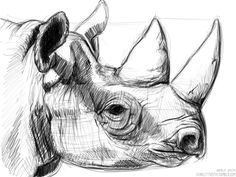 I took some photos when I went to Chester Zoo the other week and felt like doing some sketches from them. So heres a rhino Cool Art Drawings, Pencil Art Drawings, Art Drawings Sketches, Animal Sketches, Animal Drawings, Drawing Animals, Rhino Tattoo, Rhino Art, Rhino Animal