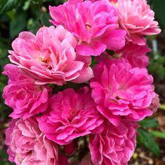 Hello beautiful....#godismyfavoritedesigner #nature #flowers