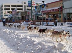 "4th Avenue Sled dog Races at ""Fur Rondy"", February ~  Anchorage Alaska  (photo by jone suleski)"