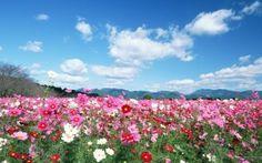 Field flowers image