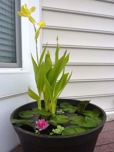 How to Set up Mini Water Gardens on Your Deck DIY Container Water Garden. Recommended plants: canna lilies, dwarf papyrus and taro (for height); water lilies or lotuses (their leaves will cover much of the water surface from sunlight, preventing algae gro Container Water Gardens, Container Gardening, Small Water Gardens, Water Containers, Container Fish Pond, Wooden Containers, Container Flowers, Mini Pond, Water Lilies