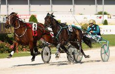 harness racing | auckland harness racing in this photo carabella ricky may carabella ...