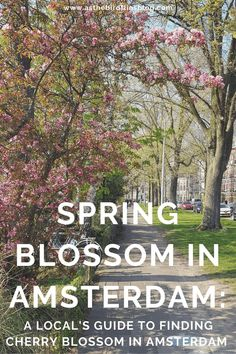 Amsterdam Travel: Where to Find Cherry Blossom in Amsterdam : As the Bird flies... Travel, Writing, and Other Journeys Amsterdam Travel Guide, Visit Amsterdam, Travel Advice, Travel Guides, Travel Tips, Start Of Winter, Cherry Blossom Season, Van Gogh Museum