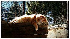 Leo! Il mio amore!! <3 l love cats!