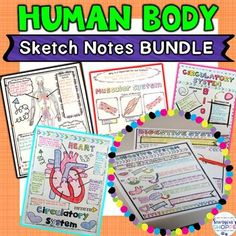 Human Body Doodle Sketch Note Activity Bundle - Use this resource with your 4th, 5th, or 6th grade upper elementary or middle school students. The human body system will come to life with the doodle sketch notes provided. It's a perfect review or study guide. Circulatory, digestive, endocrine, muscular, nervous, reproductive, and respiratory systems are all included. {fourth, fifth, sixth graders, homeschool}