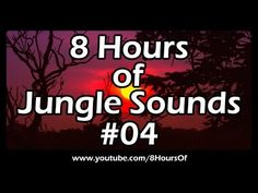 8 Hours of sleep sounds. Relaxing jungle sounds, rainforest sounds. If you listen to this during sleep or meditation you will feel peaceful and calm. Great for tinnitus, meditation, yoga, when you study, go to sleep, have insomnia or have sleep deprivation.  Please like, subscribe and comment if you enjoyed this video. It will really help me out a lot. :)  http://www.youtube.com/subscription_center?add_user=8hoursof