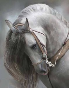 This is my absolute favorite horse breed. Andalusian horse...this picture took my breath away. acpk