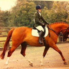 Striking 16.2 Chestnut Belgian WB Gelding 16.2hh, 15yr Gelding *FOR SALE* Parker - Striking 16.2 Chestnut Belgian WB Gelding. 15yrs schoolmaster, £1750 ono. Placed unaffiliated dressage and show jumping, careful and scopey jump, working at elementary level dressage...visit www.horseandlife.co.uk