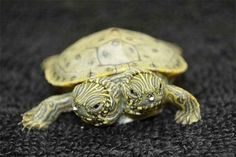 Several North American river turtles (also known as cooters) were born at the San Antonio Zoo last week, but Thelma and Louise were the only ones born with this rare condition. | There's A Two-Headed Baby Turtle Named Thelma And Louise And She's Adorable