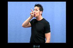 Auslan – Sign Language – Beginners - Monash Short Courses
