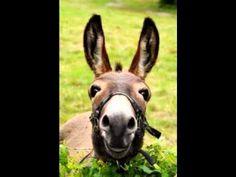 Donkey Sings Happy Birthda