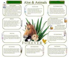 #healthypets #veterinarycare #animallovers  http://foreverluminous.flp.com/