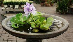 garten ideen wasserpflanzen bestimmen pflanzenideen