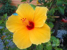 9th Ward Flower - Sherry Dooley