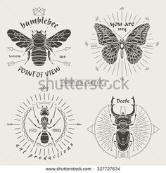 Set of vintage thin line insects labels & badges. Retro vector design graphic element, emblem, logo, insignia, sign, identity, logotype, poster. Stroke line objects with typographic. - stock vector