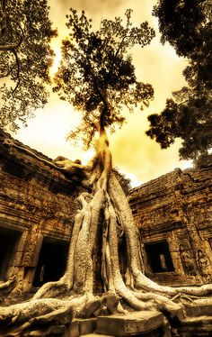 My Angkor Wat pics did not look this amazing..