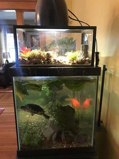 Post with 1163 votes and 77744 views. Tagged with turtle, turtles, aquarium, tank; Shared by SometimesILoveThings. Aquatic Turtle Habitat, Aquatic Turtle Tank, Turtle Aquarium, Aquatic Turtles, Turtle Pond, Water Turtles, Turtle Care, Pet Turtle, Turtle Tank Setup