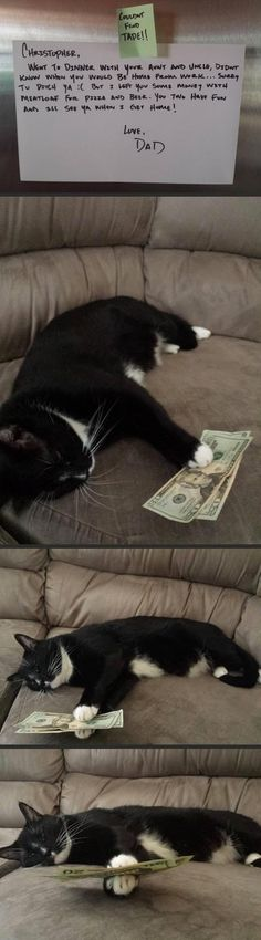 Meatloaf is the name of the cat, not what's for dinner.  He's holding money for his human to order pizza with.