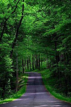 Beautiful Nature Pathway