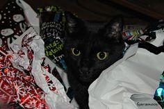 #cats #blackcats #photography by Clarissa Johal