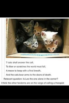 7 kittens will answer the call