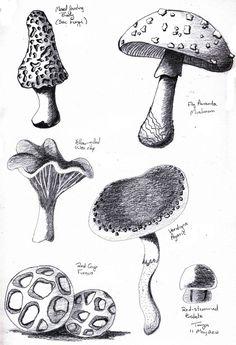Botanical Sketches 2 by Elentarri.deviantart.com on @deviantART