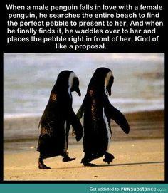 Romantic penguins