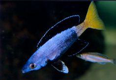 Aquarium Care for Freshwater Fish Tropical Fish Tanks, Tropical Aquarium, Saltwater Aquarium, Aquarium Set, Planted Aquarium, Aquarium Ideas, Cool Tanks, Awesome Tanks, Lac Tanganyika