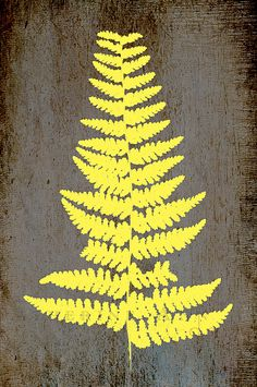 the genus about which I was going to write my dissertation. Oh well. Yellow Art, Mellow Yellow, Pattern Images, Pattern Design, Sketchbook Inspiration, Typography Poster, Land Art, Leaf Prints, Ferns