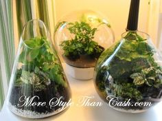 Terrariums--I can't believe these are back!! I made a bunch for my dorm room my freshman year of college--the only plants I didn't kill.