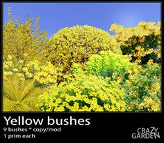Yellow bushes copy/mod * 9 shrubs * Azalea, Forsythia, Common broom