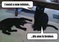 Classic LOLcat - LOLcats is the best place to find and submit funny cat memes and other silly cat materials to share with the world. We find the funny cats that make you LOL so that you don't have to. Funniest Cat Memes, Funny Cat Memes, Dog Memes, Cats Humor, Funny Humor, Funny Animal Pictures, Cute Funny Animals, Funny Cute, Funniest Animals